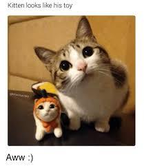 Aww Memes - kitten looks like his toy a hilarious ted aww aww meme on me me