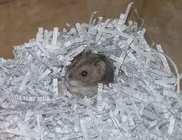 Hamster Bed Smallpetsmatter Co Uk Hamster Care