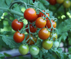 Zone Hardiness Map Zip Code by In The Garden Know Your Zone To Pick The Right Plants The