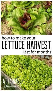 Make A Vegetable Garden by 537 Best Garden Ideas Images On Pinterest Organic Gardening