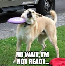 Silly Dog Meme - funny dog memes the ultimate collection dog training basics