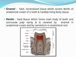 Human Dental Anatomy Introduction And Nomenclature Of Dental Anatomy
