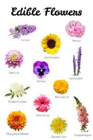 edibles flowers 42 flowers you can eat flower edible flowers and herbs