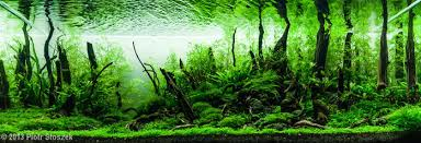 Planted Aquarium Aquascaping Getting Started With Aquascaping U2022 Aquascaping Love