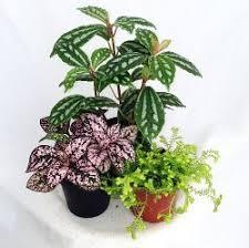 plants that need low light a list of low light terrarium plants