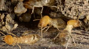Winged Termites In Bathroom Termite Damage Signs That Spell Trouble For Your Home Realtor Com