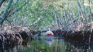 Siesta Key Florida Map by Kayak Rentals Siesta Key Fl 941 346 0891