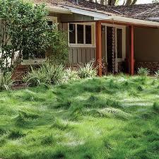best 25 drought resistant grass ideas on drought