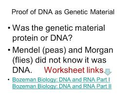 finding dna ppt video online download