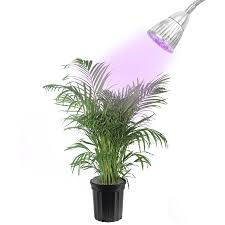 Grow Lights For Indoor Plants Canada by Hydroponics Walmart Com