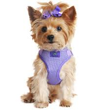 matching dog and owner halloween costumes dog clothing and custom costumes a complete line of pet supplies