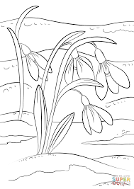 snowdrops first sign of spring coloring page free printable