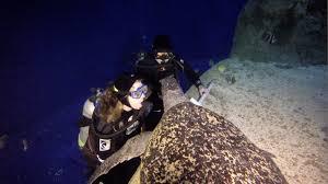 Georgia snorkeling images Snorkeling scuba diving at the downtown aquarium denver png