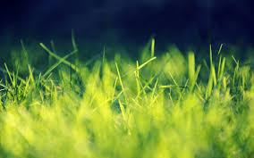 kg lawn care llc