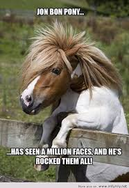 Funny Pony Memes - 20 of the funniest horse memes central steel build