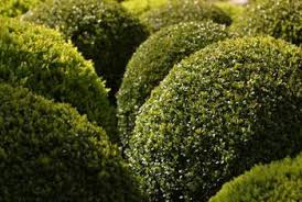 Fertilizer For Flowering Shrubs - a guide to fertilizers for bushes home guides sf gate