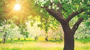 jlh tree service free estimates removal pruning stump