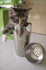Cute Kittens Meme - 39 overly adorable kittens to brighten your day