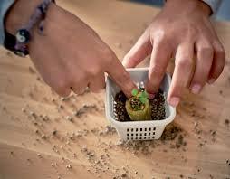 indoor gardening accessories seeds u0026 fertiliser ikea