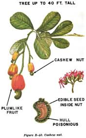 edible photos the ultimate guide to edible plants the of manliness