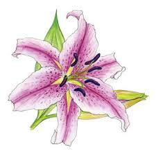 Star Gazer Lily Stargazer Lily Temporary Tattoo My Soulflower