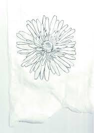 dandelion u2013 prolific project starter
