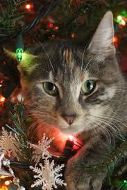 14 cats that are ruining christmas christmas tree cat and animal