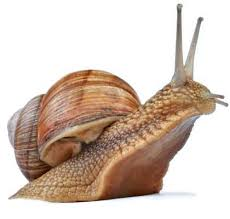 Where Can You Find Snails In Your Backyard Snail Facts And Information