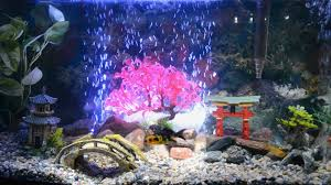 home decor asian themed fish tank decorations inspirational home