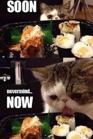 Cat Soon Meme - funny cat soon meme rofl lol all over the place pinterest meme