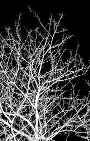 abstraction white tree branches on a black background stock