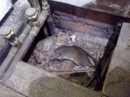 garden decking and rats garden xcyyxh com