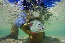 christmas island emerald water anglers