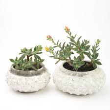 Succulent Planter Bonsai Bodhi Succulent Bonsai Diy Kit Juicykits Com