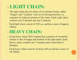 heavy chain light chain antibodies