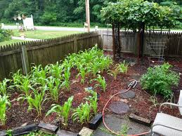 our jersey garden fruits flowers and veggies homegrown in new
