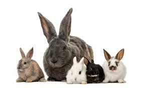 friends of rabbits benefit day great sage vegan restaurant