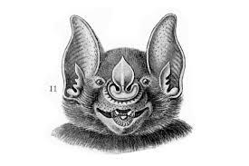 animal u2013 animal head u2013 bat face u2013 3 vintage printable at