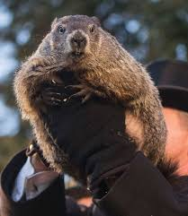 groundhog dumbest american holiday win