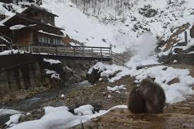 Station Closest To Winter How To Prep For The Hike To Jigokudani Monkey Park Snow Monkey