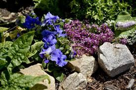 Rock Gardening An Introduction To Rock Gardening Lawn And Gardens Net