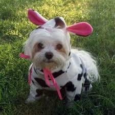 Funny Animal Halloween Costumes 25 Small Dog Halloween Costumes Ideas
