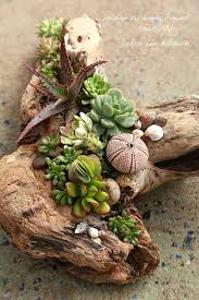 Succulent Gardens Ideas 1217 Best Endless Succulent Ideas Images On Pinterest Succulents