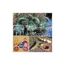 childrens ornamental cucumber hedgehog thompson capital