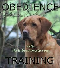 australian shepherd training tips 17 best images about puppy training on pinterest cesar millan