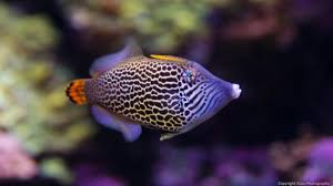 Cool Looking - cool looking fish picture of seattle aquarium seattle tripadvisor