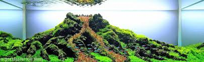 japanese aquascape 2013 aga aquascaping contest 380