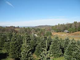 panoramio photo of among the christmas trees at benny u0027s tree