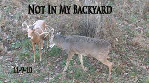 Not In My Backyard Ia10 13 Not In My Backyard Midwest Whitetail