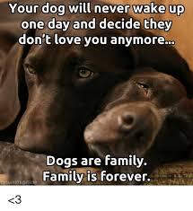 T Dog Memes - 25 best memes about dog dog memes